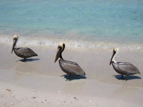 Royalton Hicacos Varadero Resort & Spa: Beach