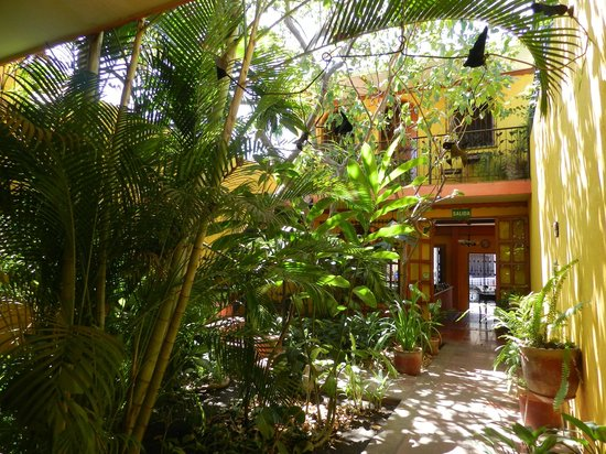 Guesthouse El Nancite : Lovely Garden Setting