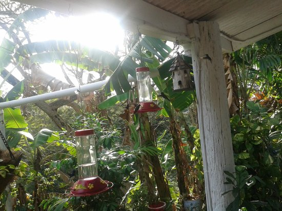Adventure Farm and Nature Reserve: Hummingbird paradise, where they feed