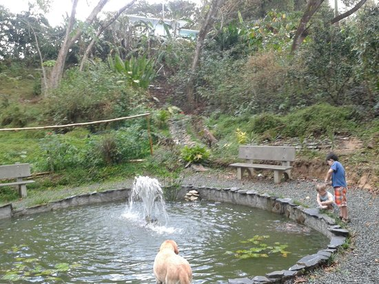 Adventure Farm and Nature Reserve: Waterfall at the poond blow the villas at AF