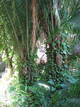 Grand Palladium Vallarta Resort & Spa: Gardens