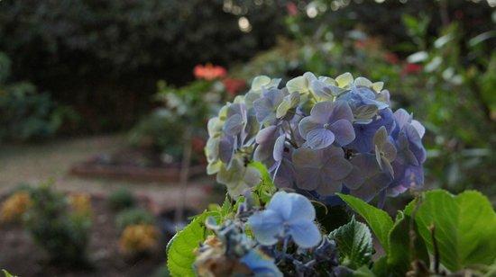 Madretierra: Flores