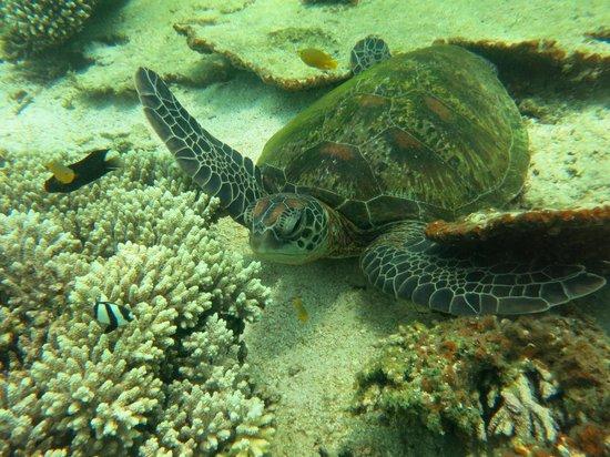 Aussie Wanderer Tours & Safaris - Day Tour: Snorkelling