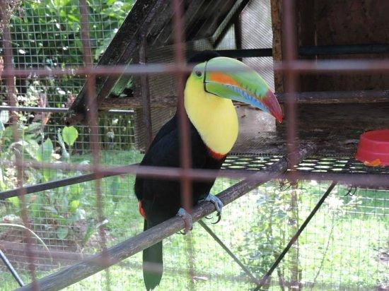 El Oasis Hotel & Restaurant: Oscar the Toucan