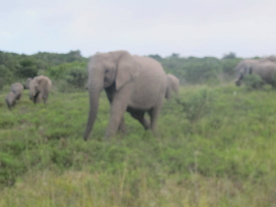 Lalibela Game Reserve: You're getting a little too close to my babies, back off!