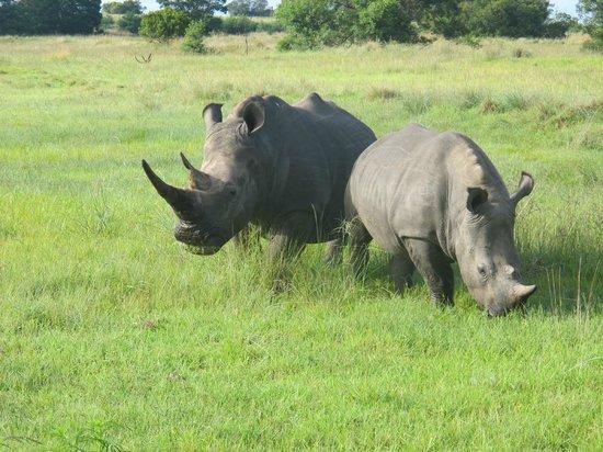 Lalibela Game Reserve: The savannah grass lawn mowers!
