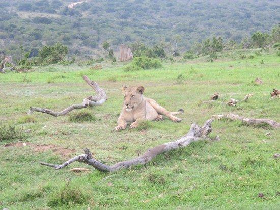 Lalibela Game Reserve: Waiting for the warthog breakfast!