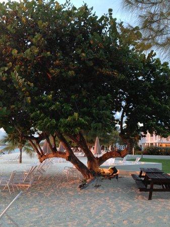 Plantana Condominiums: favorite tree on beach with hammock