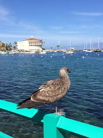 Catalina Island Inn: Beautiful Catalina Island
