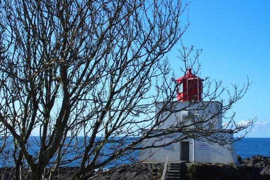 Bostrom's B&B On Little Beach Bay: Lighthouse Loop on the Wild Pacific Trail (easily accessible from the property)