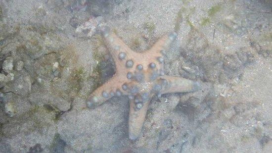 Grand Mirage Resort & Thalasso Spa - Bali: Star fish