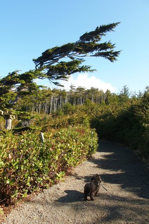 Wild Pacific Trail: lovely walk