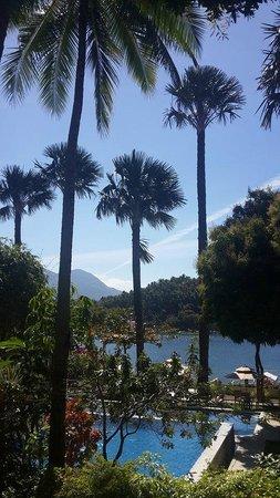 Buri Resort & Spa: Towering Buri Trees