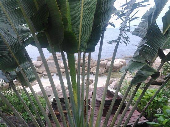 Sensi Paradise : Вид на маленькую террасу с лежаками со стороны номера
