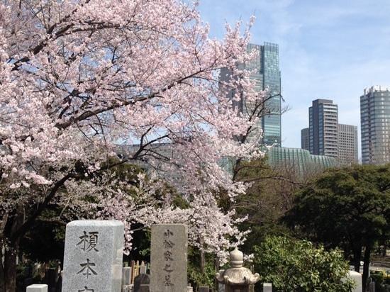 Grand Hyatt Tokyo: Aoyama cemetry' cherry blossoms next to The Grand Hyatt