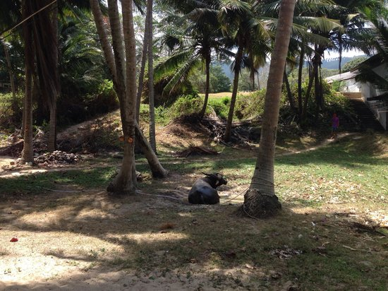 Impiana Resort Chaweng Noi : Рядом с отелем