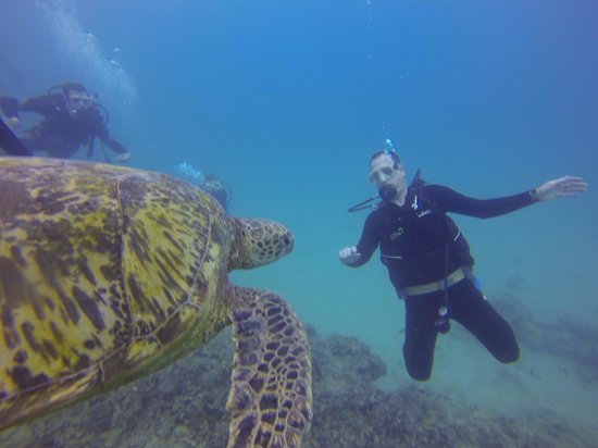 Oahu Diving: Turtles