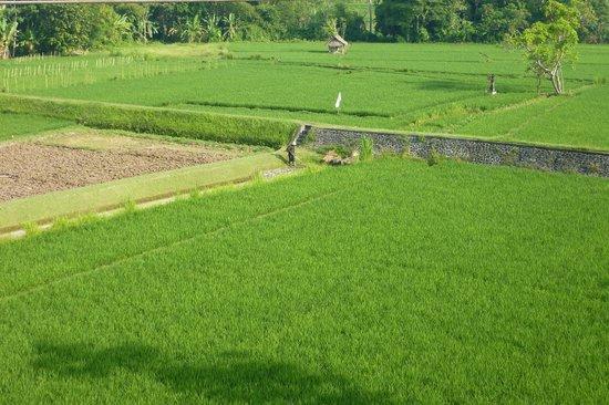 Balam Bali Villa : Vue depuis la terrasse du petit déjeuner