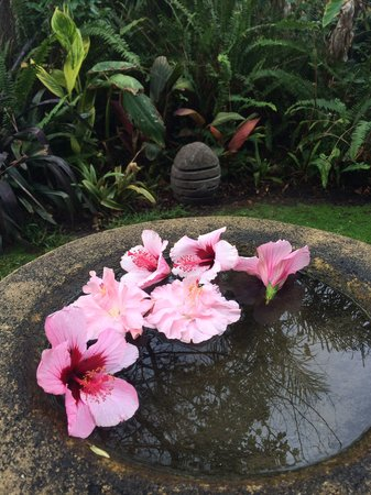 Albany Bali Style Accommodation : Bird bath in garden