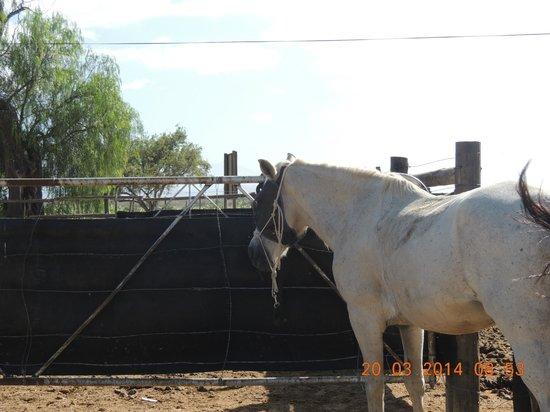 Kango Horse Riding: 6