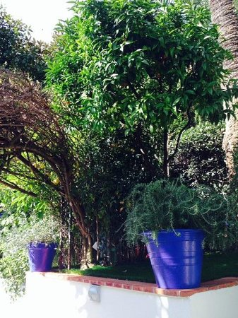 Hotel de Provence: Jardin