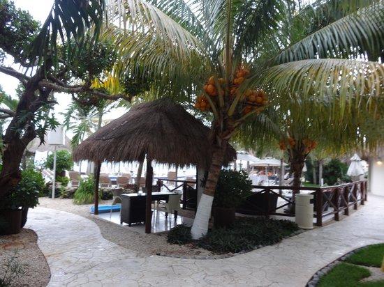 Desire Resort & Spa Riviera Maya : Cocoa tree