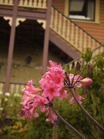 Bendalls Accommodation: Lovely gardens