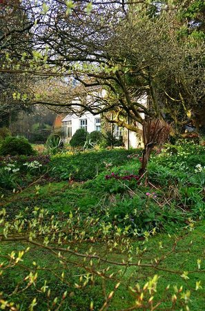 Lower House: Dafs, helibores and fritillary