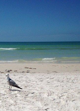 Tropical Beach Resorts: Enjoying the view on the beach