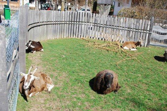 Herrmannsdorfer Landwerkstätten: goats in the barnyard