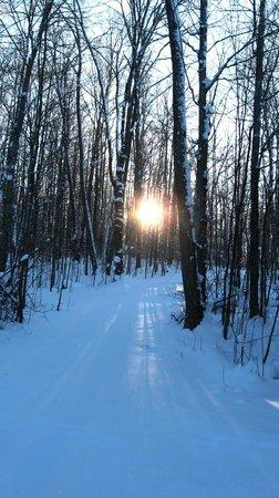 Elvyn Lea Lodge: Winter Snowshoe & Ski Trails