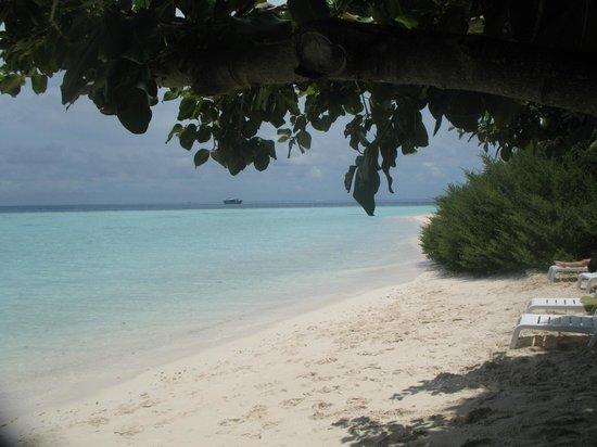 Biyadhoo Island Resort: Vegetazione sulla spiaggia