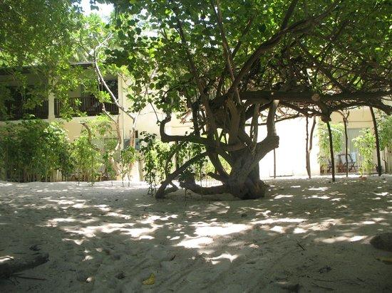 Biyadhoo Island Resort: Esterno palazzina camere