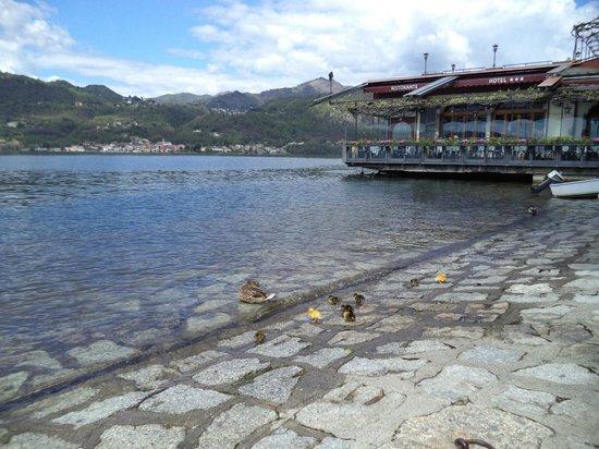 Antico Caffe del Lago: Утята бросают вызов стихии )))