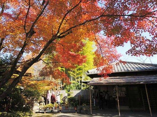 Meitetsu Inuyama Hotel : 日本庭園 有楽苑(うらくえん)の紅葉
