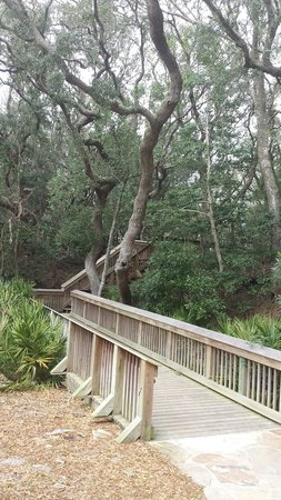Hampton Inn & Suites Jekyll Island: View to the left of our patio.