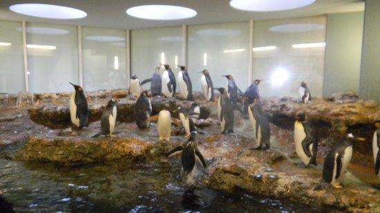 Zoo Basel : Penguins