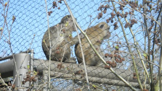 Zoo Basel : Monkeys never dissapoint!