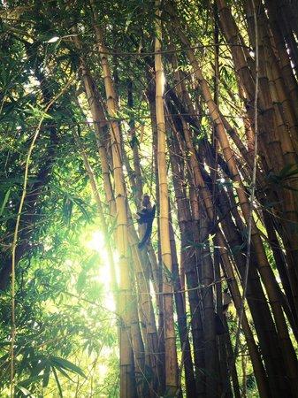 Hotel bungalows SolyLuna los Almendros.: Monkey tree.