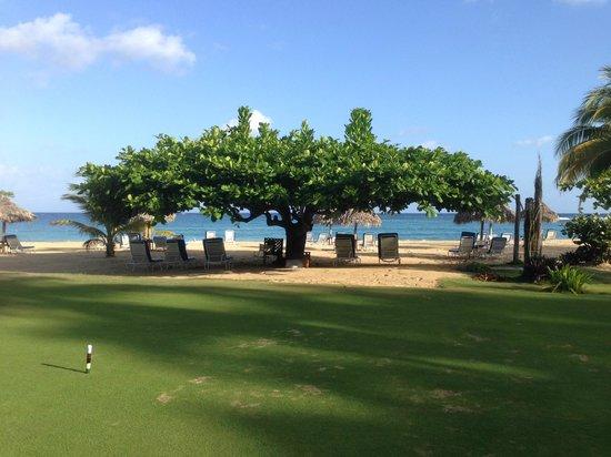 Jamaica Inn : Almond tree on edge of beach