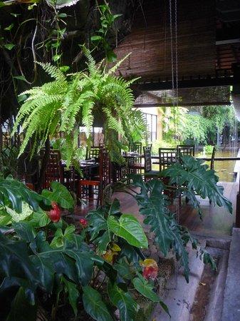 Cinnamon Grand Colombo : living in  jungle in a city