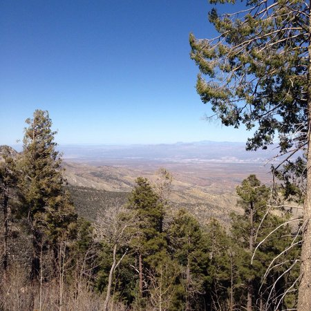 Mt. Lemmon Scenic Byway: Almost at the top