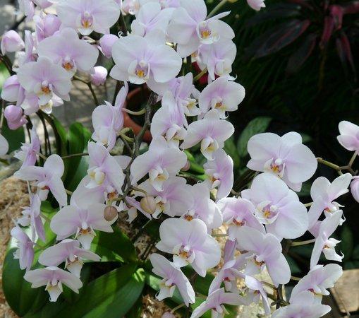 Hisaya-odori Garden Flarie: 温室にあるランの花
