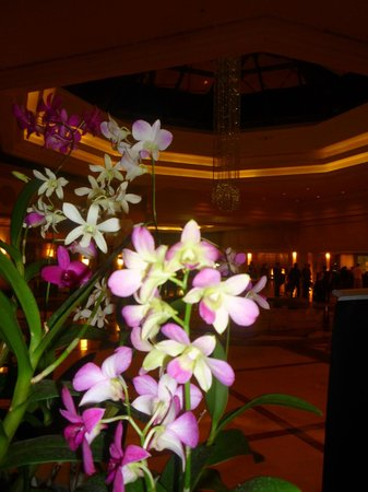 Cinnamon Grand Colombo : orchids everywhere