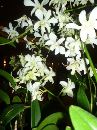Cinnamon Grand Colombo : more orchids