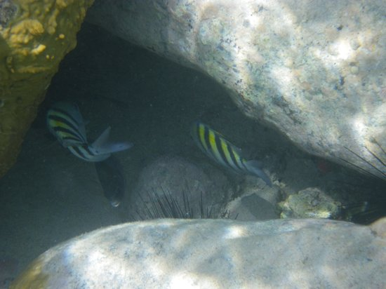 Rhino Riders out to Creole Rock: Clear Water