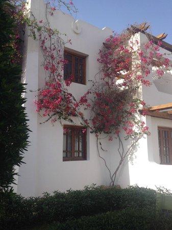 Mexicana Sharm Resort: Территория отеля