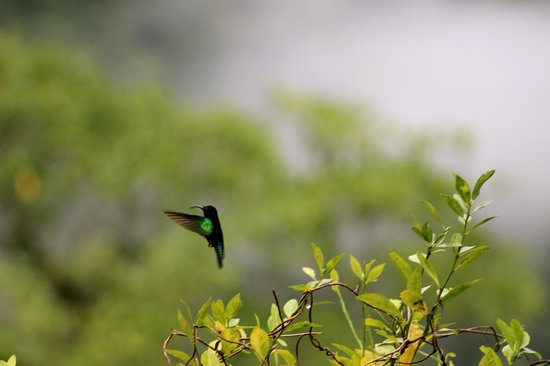 Rosalie, Dominica: Hummingbird outside the Carib cabin