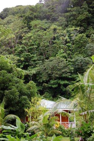 Mermaid's Secret - Riverside Retreat : Carib cabin