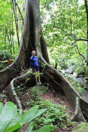 Mermaid's Secret - Riverside Retreat : At the waterfall